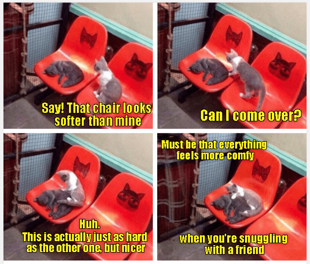 cat meme - Automotive lighting - Say! That chair looks softer than mine Can I come over? Must be that euerything feels more comfy Huh. This is actually just as hard as the other one, but nicer when you're snuggling with a friend