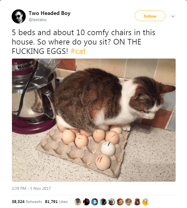 Cat - Two Headed Boy Follow @leetabix 5 beds and about 10 comfy chairs in this house. So where do you sit? ON THE FUCKING EGGS! #cat 2:39 PM - 5 Nov 2017 38,324 Retweets 81,791 Likes