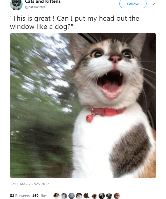 """Cat - Cats and Kittens Follow @catsnkittys """"This is great ! Can I put my head out the window like a dog?"""" 12:11 AM - 26 Nov 2017 52 Retweets 160 Likes"""