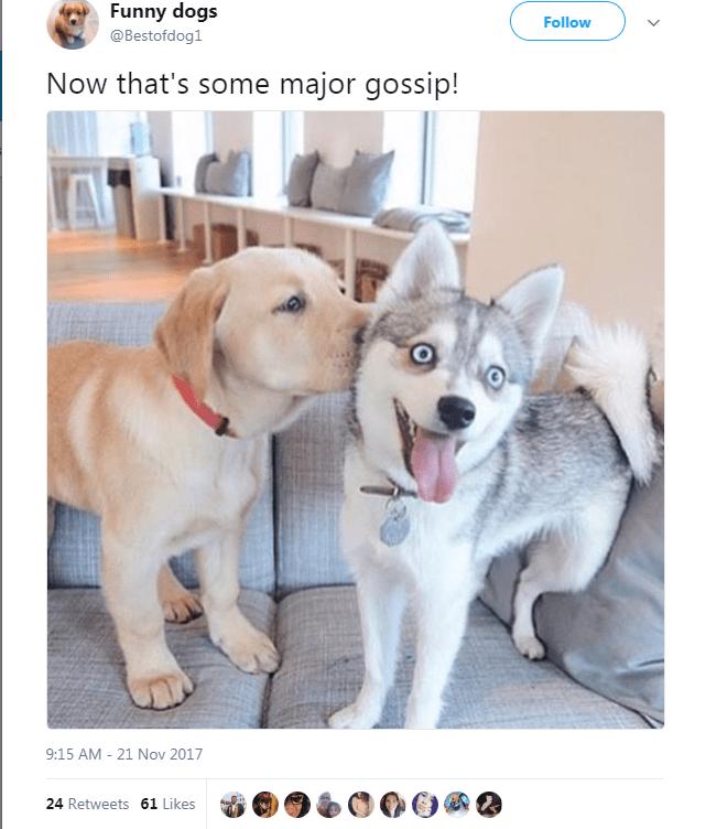 Dog breed - Funny dogs Follow @Bestofdog1 Now that's some major gossip! 9:15 AM - 21 Nov 2017 24 Retweets 61 Likes