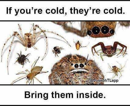 Funny meme about letting spiders in from the cold.