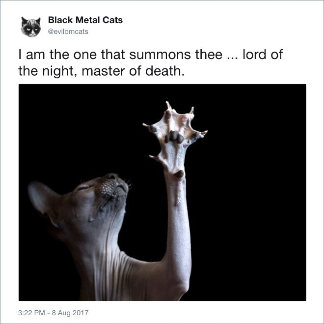 Organism - Black Metal Cats @evilbmcats I am the one that summons thee lord of the night, master of death 3:22 PM 8 Aug 2017