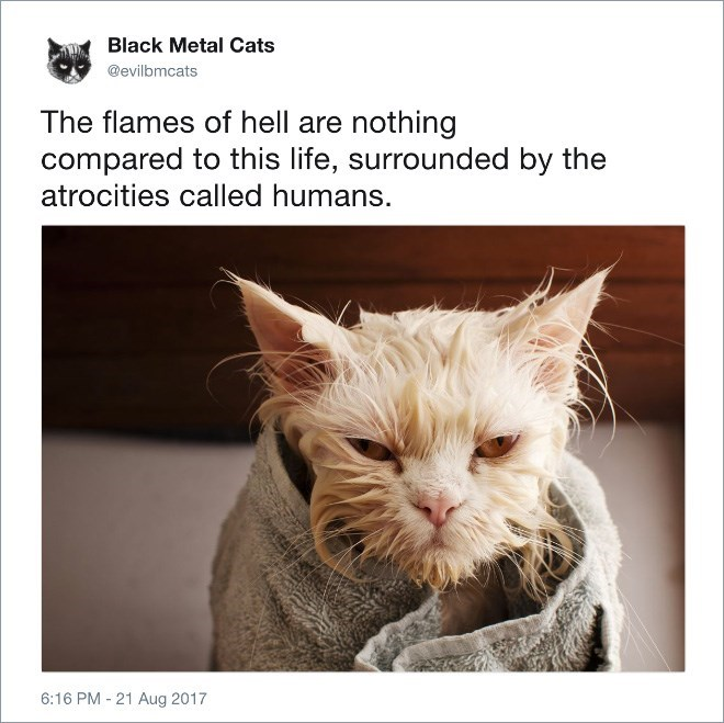 Cat - Black Metal Cats @evilbmcats The flames of hell are nothing compared to this life, surrounded by the atrocities called humans. 6:16 PM 21 Aug 2017