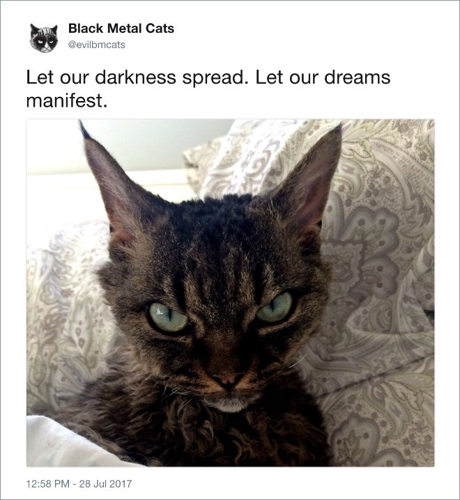 Cat - Black Metal Cats @evilbmcats Let our darkness spread. Let our dreams manifest. 12:58 PM 28 Jul 2017