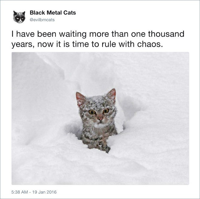 Cat - Black Metal Cats @evilbmcats I have been waiting more than one thousand years, now it is time to rule with chaos. 5:38 AM 19 Jan 2016