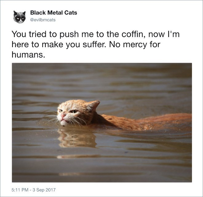 Felidae - Black Metal Cats @evilbmcats You tried to push me to the coffin, now I'm here to make you suffer. No mercy for humans. 5:11 PM - 3 Sep 2017
