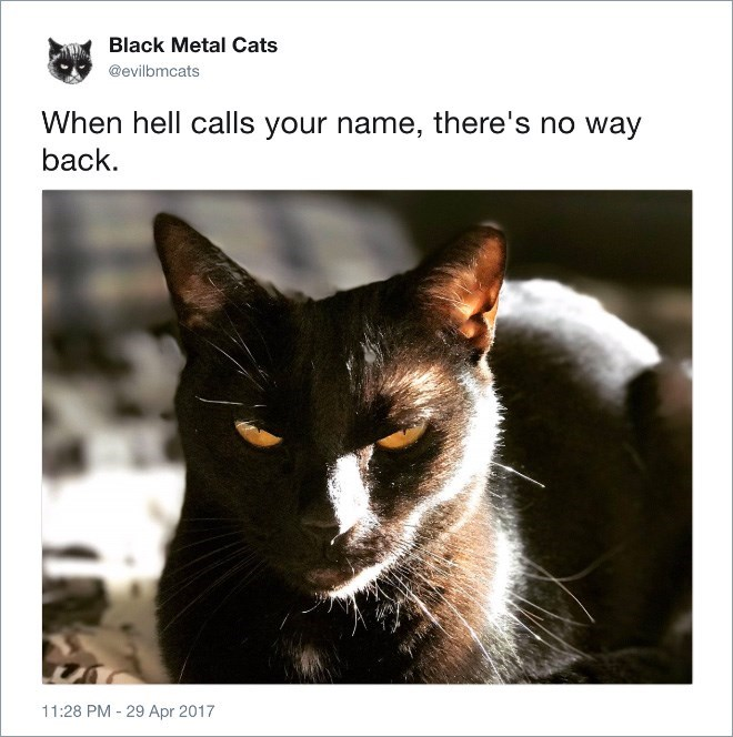 Cat - Black Metal Cats @evilbmcats When hell calls your name, there's no way back. 11:28 PM - 29 Apr 2017