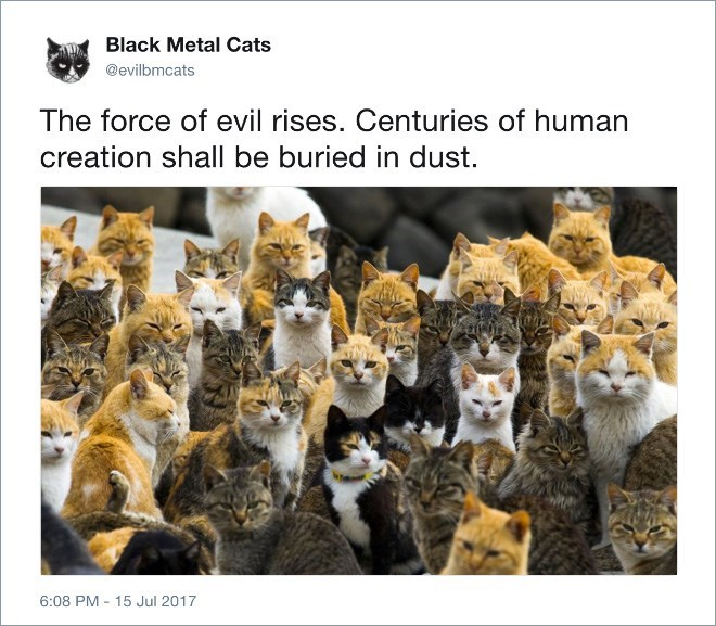 Cat - Black Metal Cats @evilbmcats The force of evil rises. Centuries of human creation shall be buried in dust. 6:08 PM 15 Jul 2017