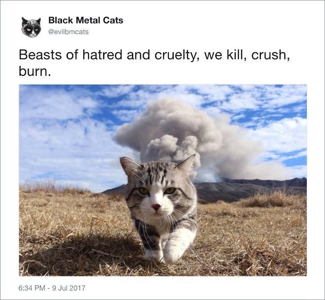 Adaptation - Black Metal Cats @evilbmcats Beasts of hatred and cruelty, we kill, crush, burn 6:34 PM 9 Jul 2017