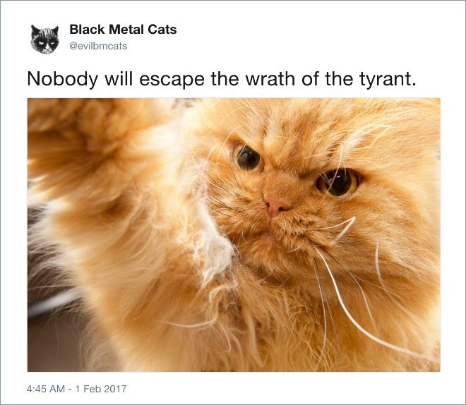 Cat - Black Metal Cats @evilbmcats Nobody will escape the wrath of the tyrant. 4:45 AM 1 Feb 2017