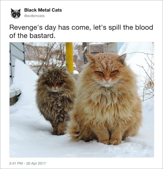 Cat - Black Metal Cats @evilbmcats Revenge's day has come, let's spill the blood of the bastard. 5:41 PM 30 Apr 2017