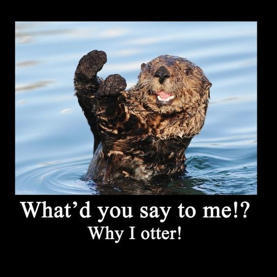 Sea otter - What'd you say to me!? Why I otter!