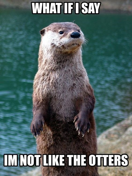 Mammal - WHAT IFI SAY IM NOT LIKE THE OTTERS