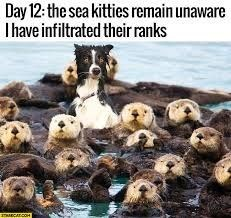 Vertebrate - Day 12: the sea kitties remain unaware Thave infiltrated their ranks mECATCOH