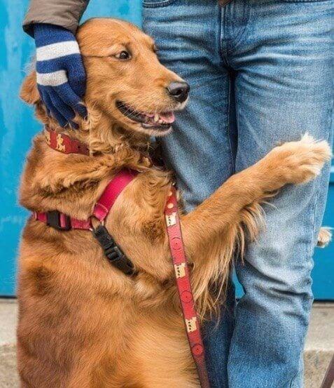 Dog - ..