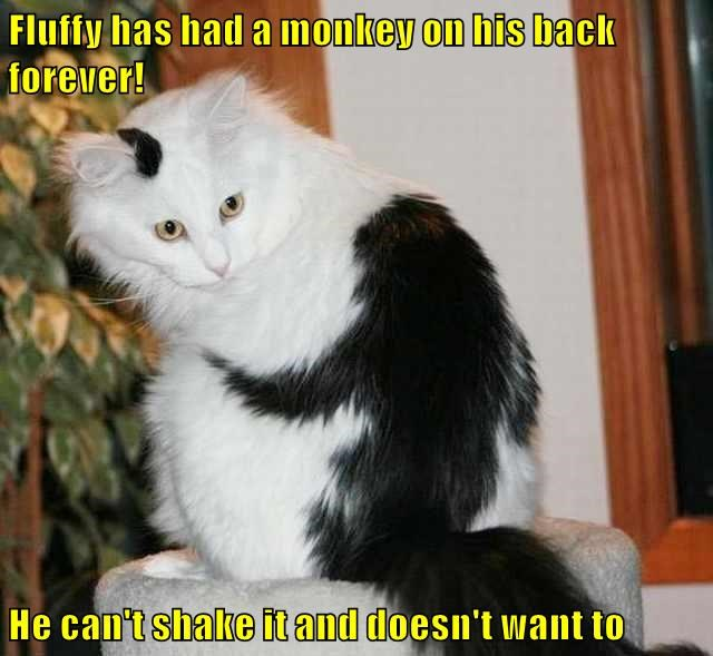 Cheezburger Image 9099841536
