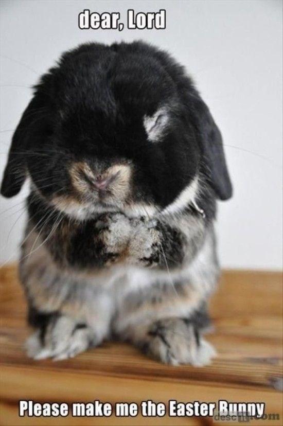 meme - Domestic rabbit - dear, Lord Please make me the Easter Bunny esc itom