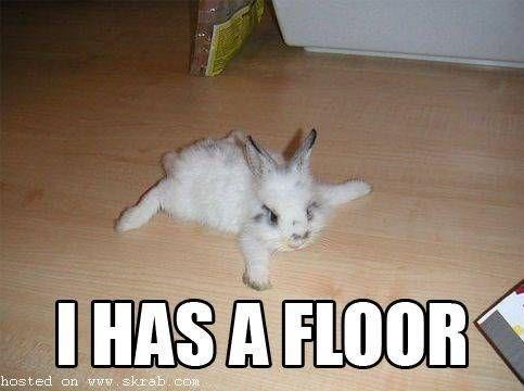 meme - Cat - IHAS A FLOOR hosted on www.skrab. con