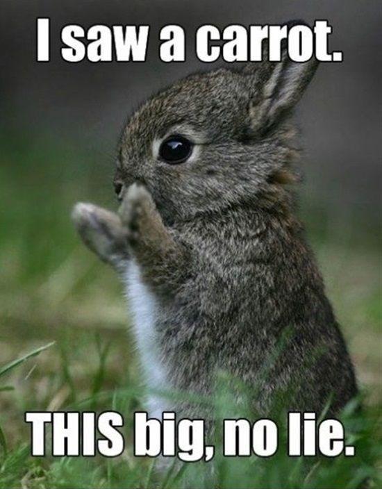 meme - Mountain Cottontail - I saw a carrot. THIS big, no lie.