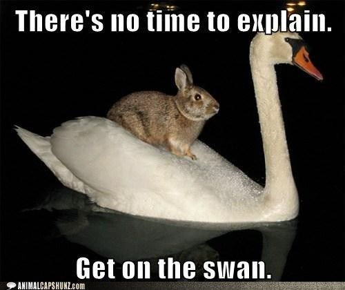 meme - Vertebrate - There's no time to explain. Get on the swan. ANIMALCAPSHUNZ.com