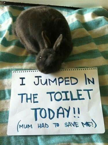 meme - Photo caption - I JUMPED IN THE TOILET TODAY!! MUM HAD TO SAVE ME)