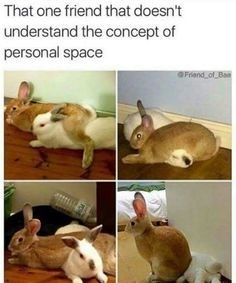meme - Rabbit - That one friend that doesn't understand the concept of personal space Friand of Ba