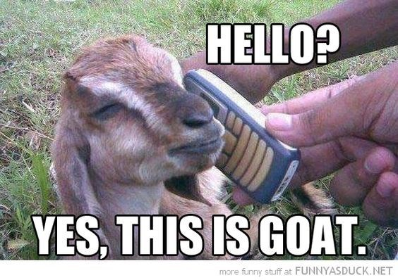Goats - HELLO? YES, THIS IS GOAT more funny stuff at FUNNYASDUCK.NET