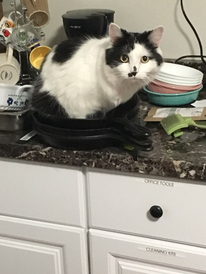 Cat - ( OFFICE TOOLS CLEANING KITS