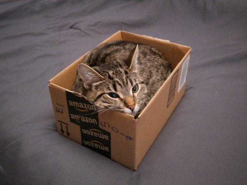 Cat - amazon