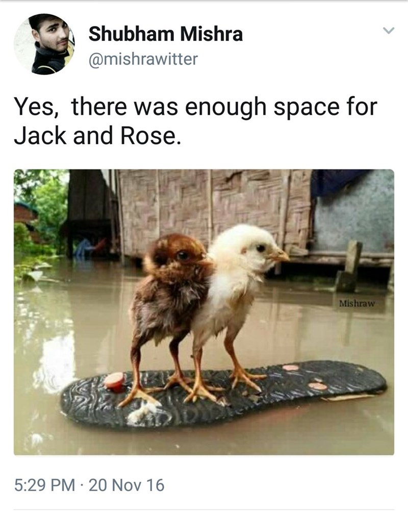 Vertebrate - Shubham Mishra @mishrawitter Yes, there was enough space for Jack and Rose. Mishraw 5:29 PM 20 Nov 16 .