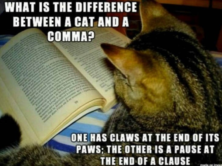 Cat - WHAT IS THE DIFFERENCE BETWEEN A CAT AND A COMMA? s ONE HAS CLAWS AT THE END OF ITS PAWS; THE OTHER IS A PAUSE AT THE END OF A CLAUSE