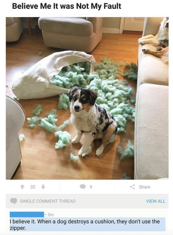 Dog - Believe Me It was Not My Fault 32 Share SINGLE COMMENT THREAD VIEW ALL 3m I believe it. When a dog destroys a cushion, they don't use the zipper.