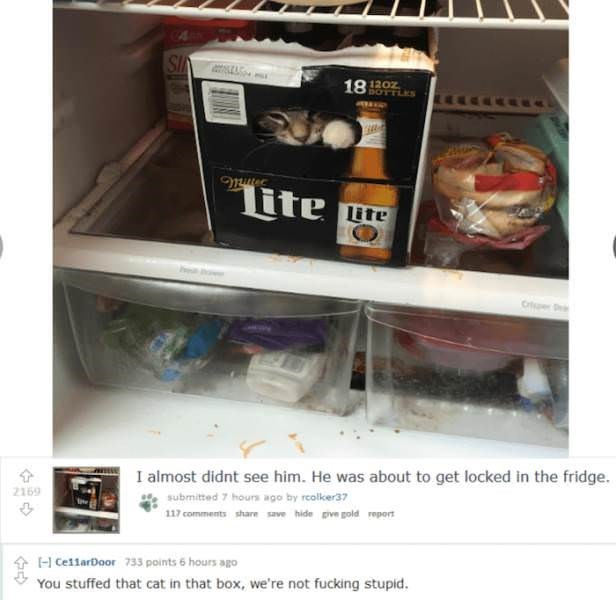 Material property - SI 18 120z BOTTLES tte ite Cr I almost didnt see him. He was about to get locked in the fridge. 2169 submitted 7 hours ago by rcolker37 117 comments share save hide pive gold report 733 points 6 hours ago H Ce11arDoor You stuffed that cat in that box, we're not fucking stupid.