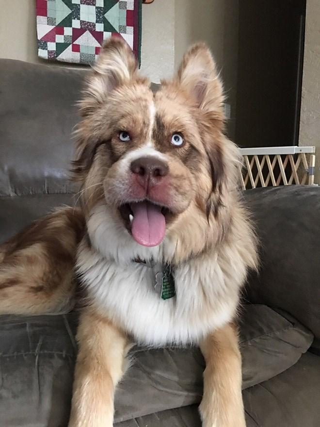 Dog - WOCOH