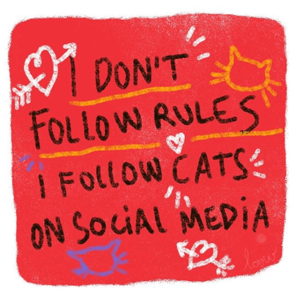 Text - DON'T FOLLOW RULES I FOlLow CATS ON SOCUAL MEDIA