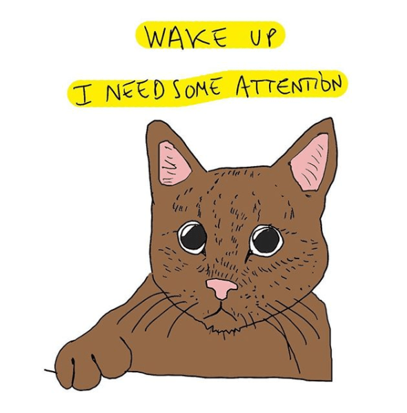 Cat - WAKE UP I NEED SONE ATTENTIDN