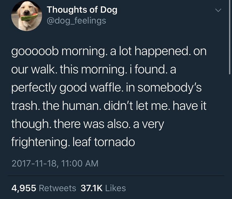 Text - Thoughts of Dog @dog_feelings gooooob morning. a lot happened. on our walk. this morning. i found. a perfectly good waffle. in somebody's trash.the human. didn't let me. have it though. there was also. a very frightening. leaf tornado 2017-11-18, 11:00 AM 4,955 Retweets 37.1K Likes