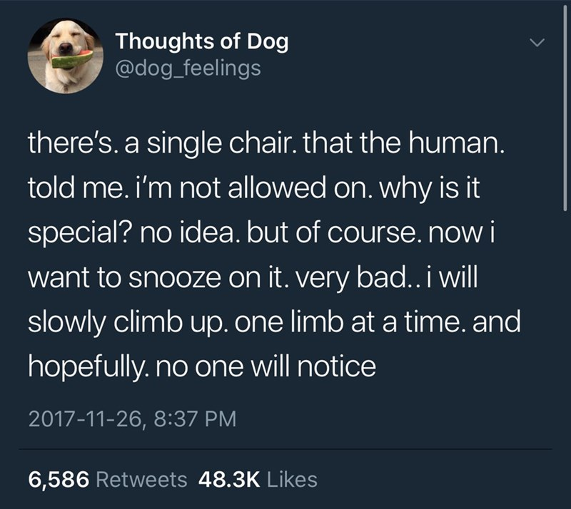 Text - Thoughts of Dog @dog_feelings there's. a single chair. that the human. told me. i'm not allowed on. why is it special? no idea. but of course. now i want to snooze on it. very bad..i will slowly climb up. one limb at a time. and hopefully.no one will notice 2017-11-26, 8:37 PM 6,586 Retweets 48.3K Likes