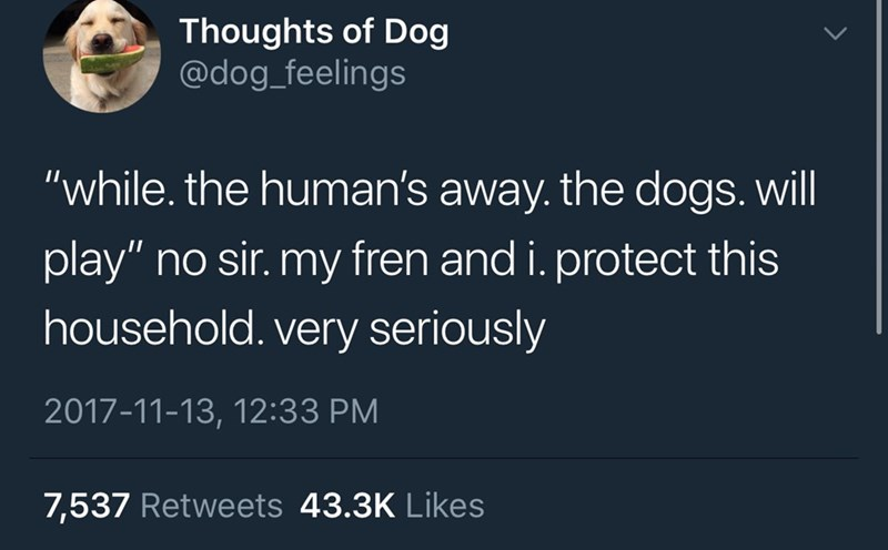 "Text - Thoughts of Dog @dog_feelings ""while. the human's away. the dogs. will play"" no sir. my fren and i. protect this household. very seriously 2017-11-13, 12:33 PM 7,537 Retweets 43.3K Likes"