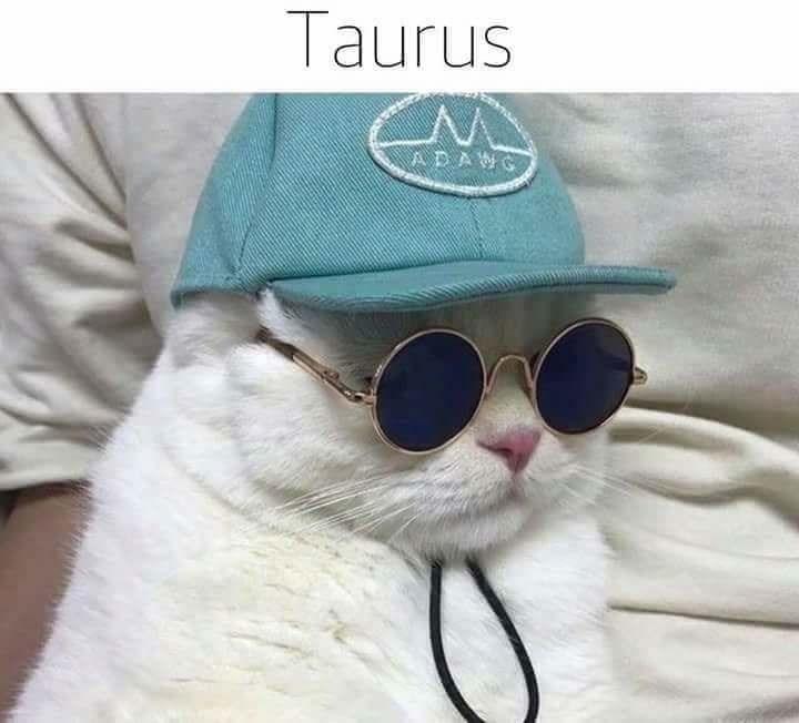 zodiac - Eyewear - Taurus ADAWG