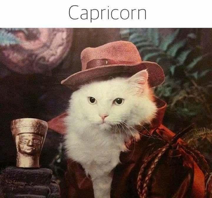 zodiac - Cat - Capricorn