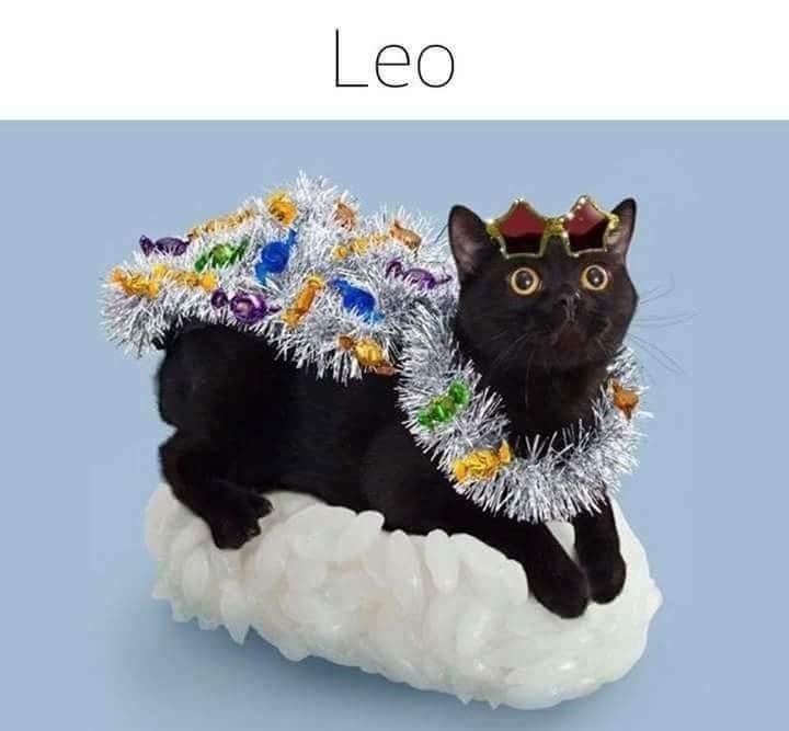 zodiac - Cat - Leo