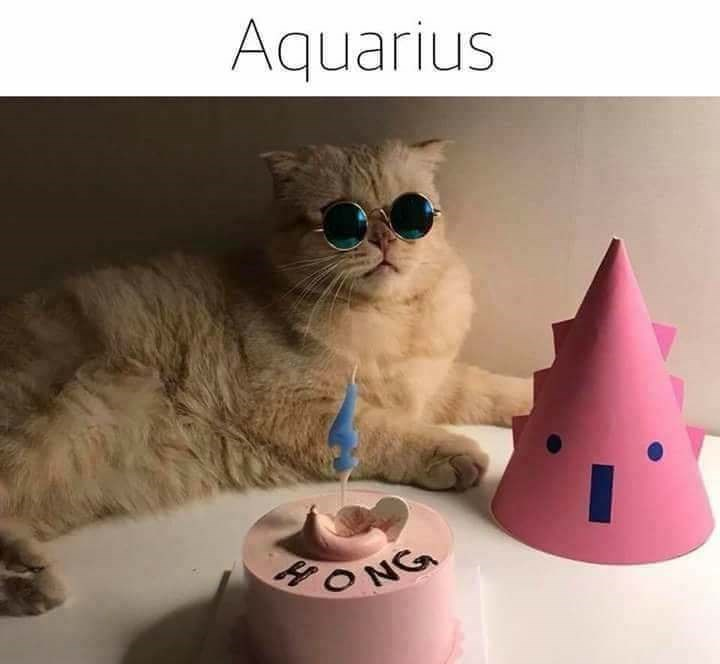 zodiac - Cat - Aquarius ONG