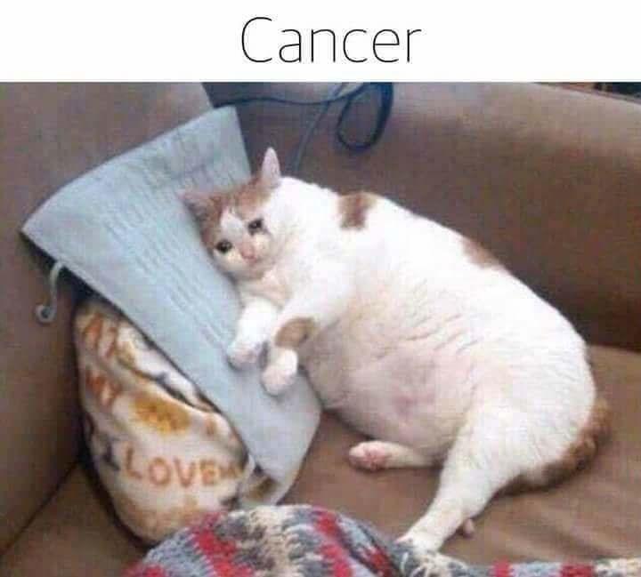 zodiac - Cat - Cancer LoVEn