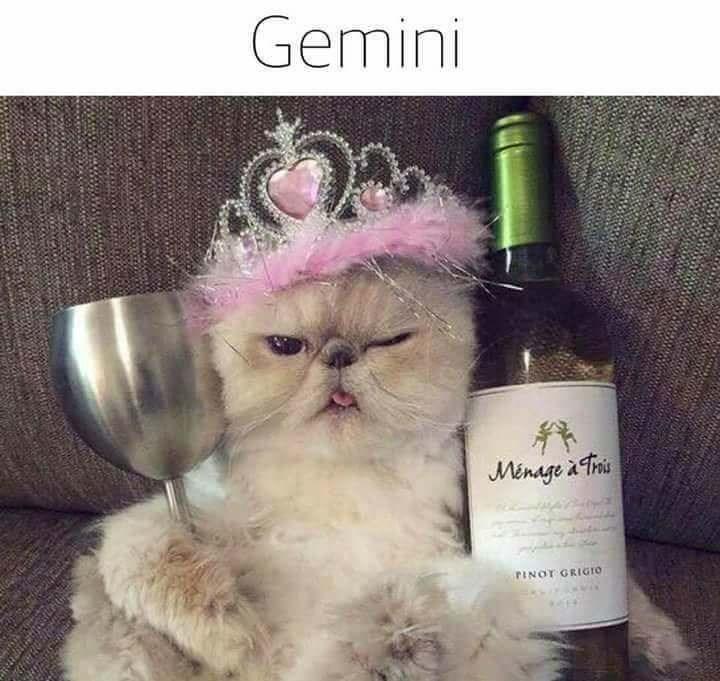 zodiac - Cat - Gemini Minage ris PINOT GRIGIO