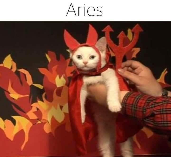 zodiac - Animated cartoon - Aries