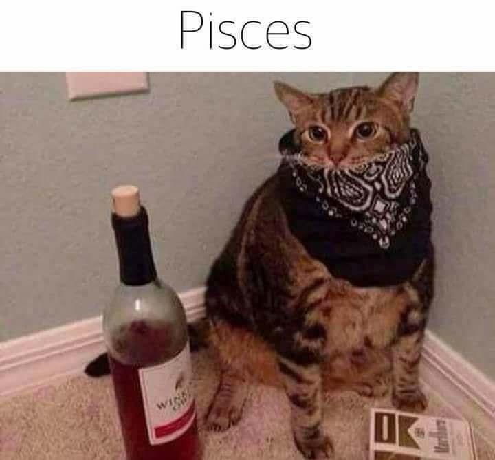 zodiac - Cat - Pisces WINE