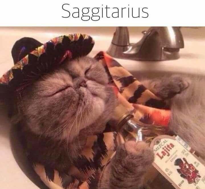 zodiac - Cat - Saggitarius MEZCAL e Lajita