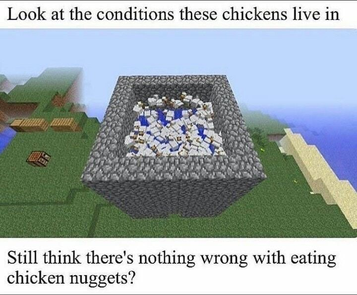 Biome - Look at the conditions these chickens live in Still think there's nothing wrong with eating chicken nuggets?