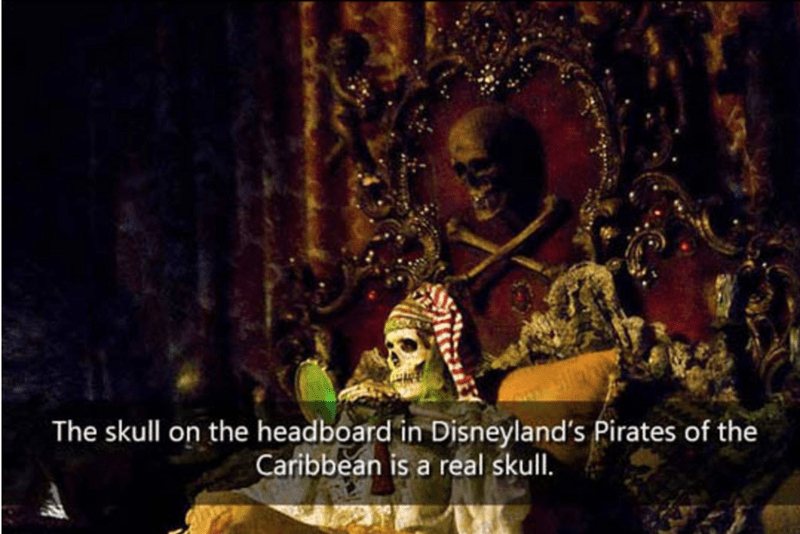 Organism - The skull on the headboard in Disneyland's Pirates of the Caribbean is a real skull.